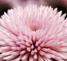 Chrysanthemum  by Alison Cornford-Matheson