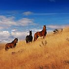High Country Brumbies by Raquel O'Neill