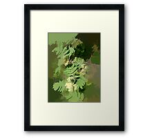 Abstract of Rowan Blossom (Mountain Ash) Framed Print