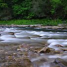 Spring Along The Loyalsock Creek by Molly  Kinsey