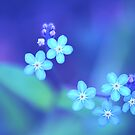 Forget-me-not by Pivi  Valkonen