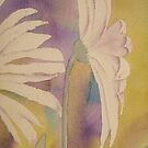 Watercolour: Daisy by Marion Chapman