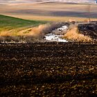 early spring subtle growth freshly ploughed fields by jlukyn