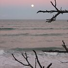 Full moon rising through seagrape branches by nauticalelf