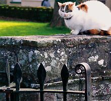 Church Yard Cat by Tigger