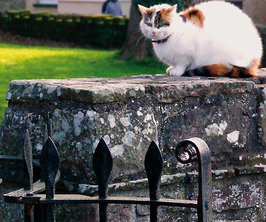 Church Yard Cat by Tigger