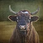Portrait of a Bull by vigor