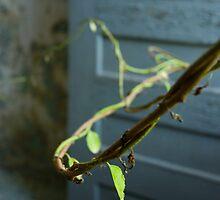 leaf by rob dobi
