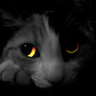 Cats Eyes 2 by artBarfuncle