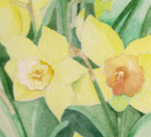 Daffodils out of the picture Sticker