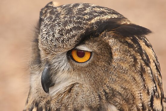 Eagle Owl by Gregg Williams