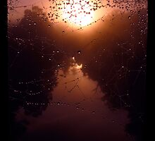 Sunrise Spider Web by thereisnosquare