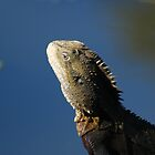 Eastern Water Dragon by flash62au