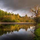 First Light, Dudmaston Pool, Shropshire, England by dotcomjohnny