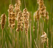 Rushes and Reeds by Caroline Gorka