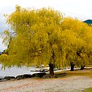 Willow trees by Hans Kawitzki