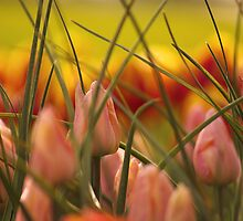 Emerging Spring. by Todd Rollins