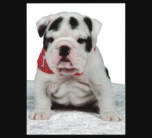 English Bulldog by ronibgood