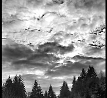 Always Look Up by Karen  Bardal Tillotson