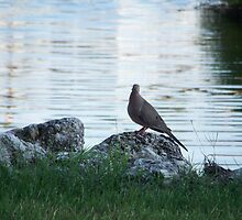 Lonesome Dove by Junebug60