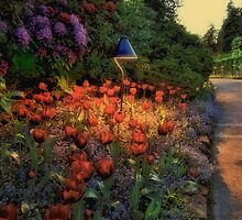 Butchart Gardens at Night 2 by Deri Dority