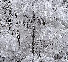 A mantle of white.... by John Schneider
