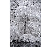 A mantle of white.... > Photographic Print