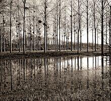 Marne Canal by Victor Pugatschew