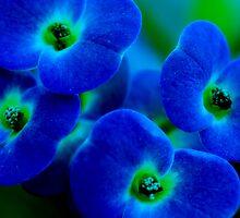 blue flowers by Lori Botelho
