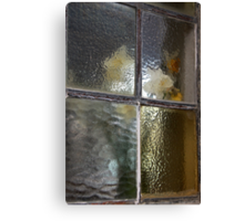 Frosted Daffodils  Canvas Print