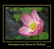 Emerging Lotus Beauty by Keith Richardson