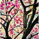 May Tree by Mark Ross