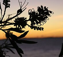 Austrailian Bush  sunset from behind a plant  by PennyB