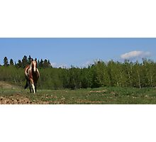 Chico in the Country Photographic Print