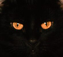 I See You by lletizia