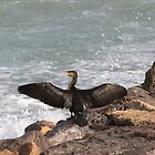 Cormorant cooling off by missmoneypenny