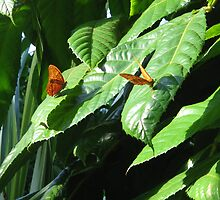 Flutterby by kossimarsalsa