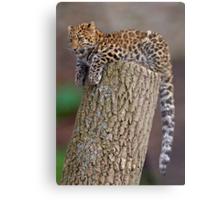 A Leopard's Tail Metal Print