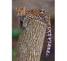 A Leopard's Tail Photographic Print