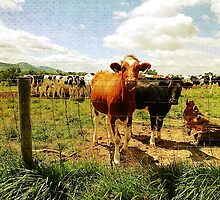 Country Cows by leslie wood