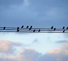 High Wire Birds by Joakim