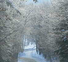 Winter Wonderland by Jessica Jones
