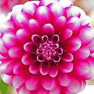 Pretty in Pink by ChereeCheree
