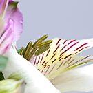 White Flower by Steve Small
