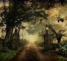 One Tree Hill gates by Robyn Lakeman