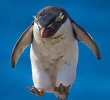 Rockhopper Penguin by Simon Coates