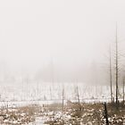 Winter Beauty in the Snow and Fog by Elizabeth Thomas