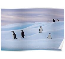 Chinstrap Penguins - Antarctica Poster