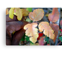 This is poison oak Canvas Print