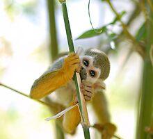 Squirrel Monkey by Nathan Lesko